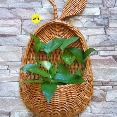گلدان آویز طرح گلابی