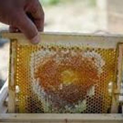 عسل یک کیلویی سبلان