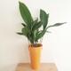گلدان فلزی مخروطی ارتفاع بدون گیاه