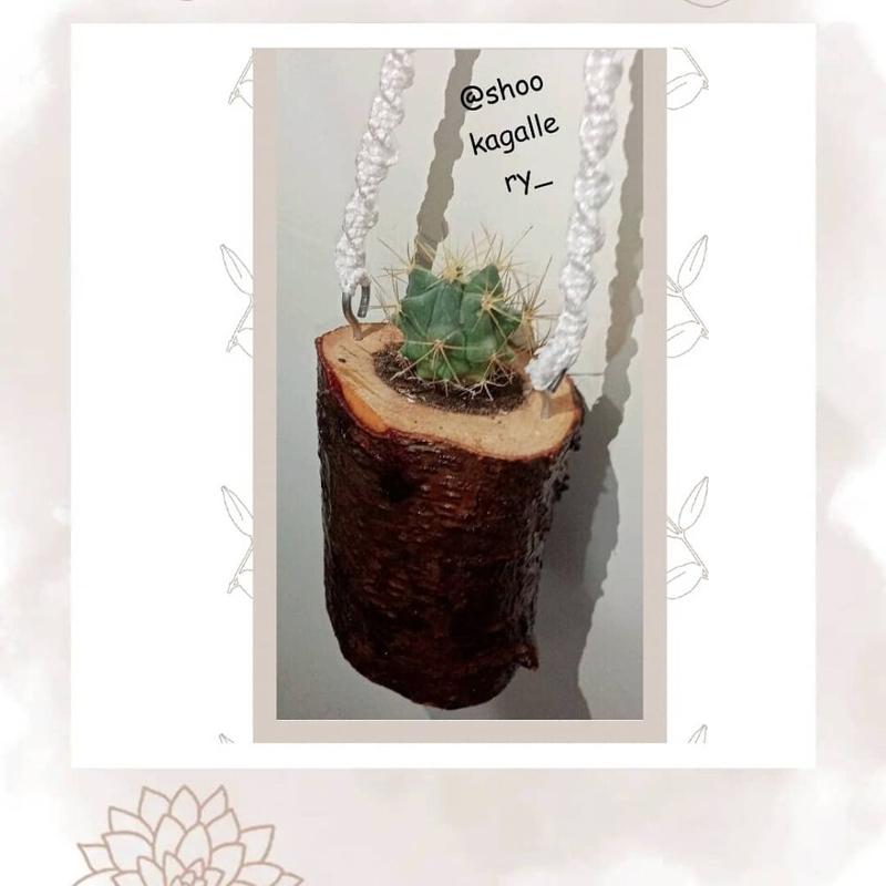 گلدان ارگانیک