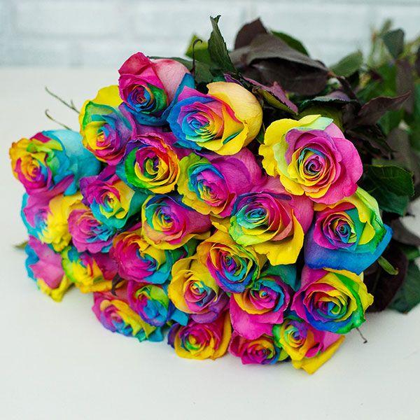 گل رز چندرنگ