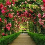 گل و گیاه لورد